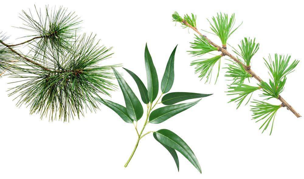 ilon Pflanzenstoffe